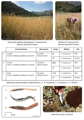 Figure 2. Cadre expérimental : moisson de céréales domestiques (T. monococcum), 2013, Séranon. Sud de la France. Détail des expériences.